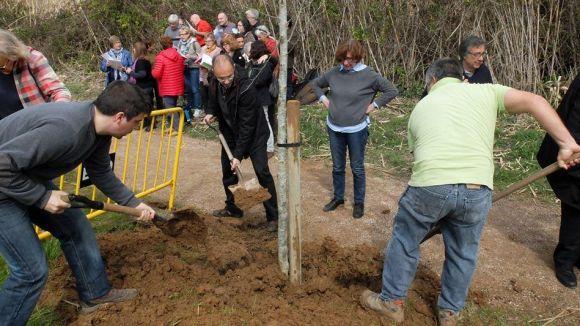 La Festa de l'Arbre de Valldoreix arriba aquest diumenge a la 5a edici amb la plantada d'un roure